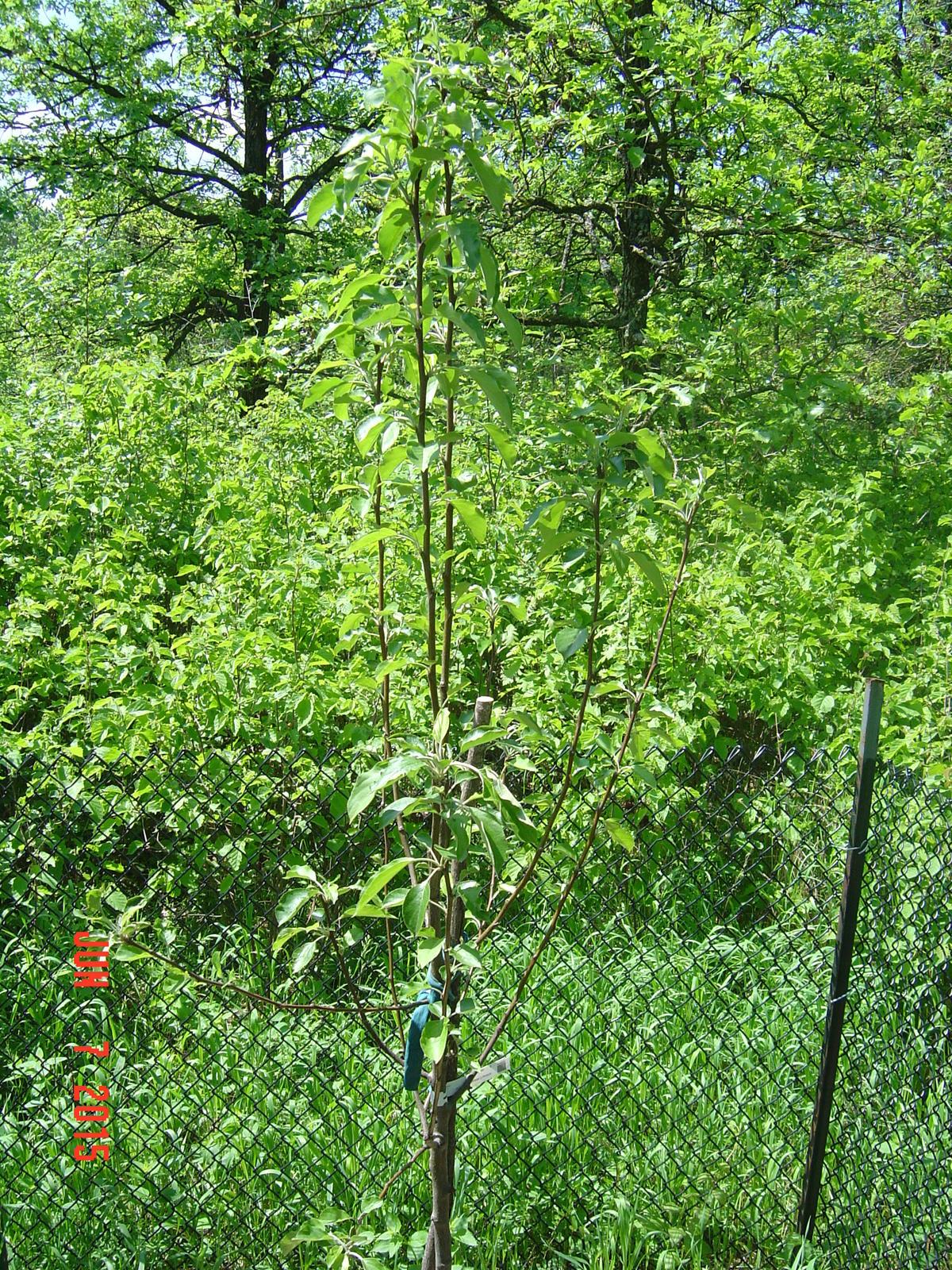 trees 6-15 010.JPG