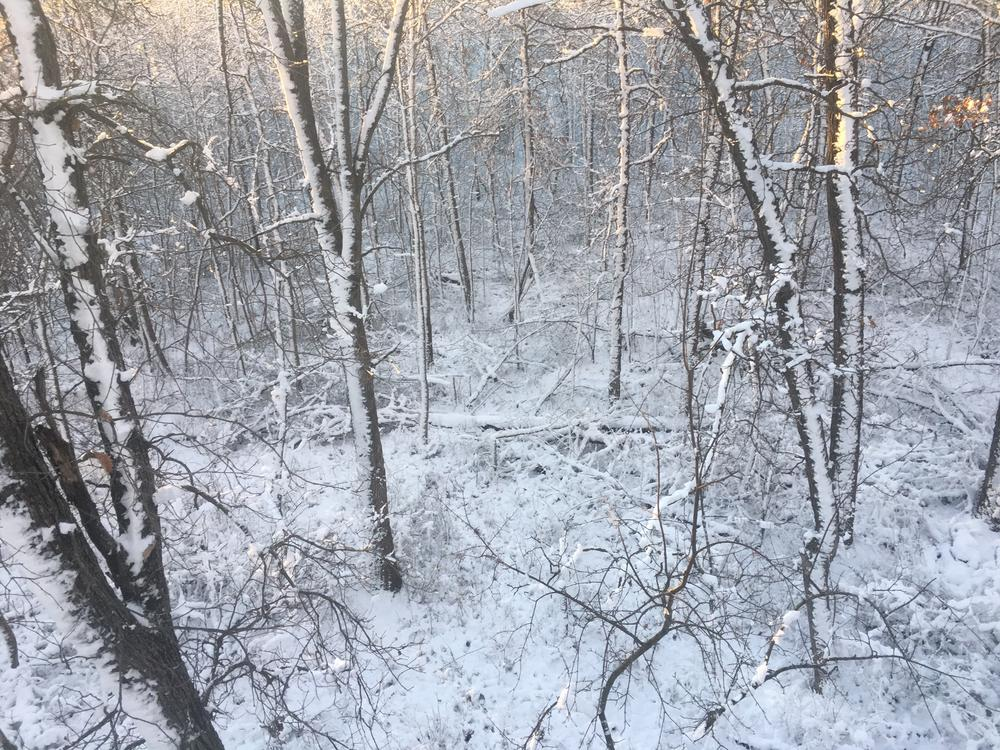 Holmes snow 2016.JPG