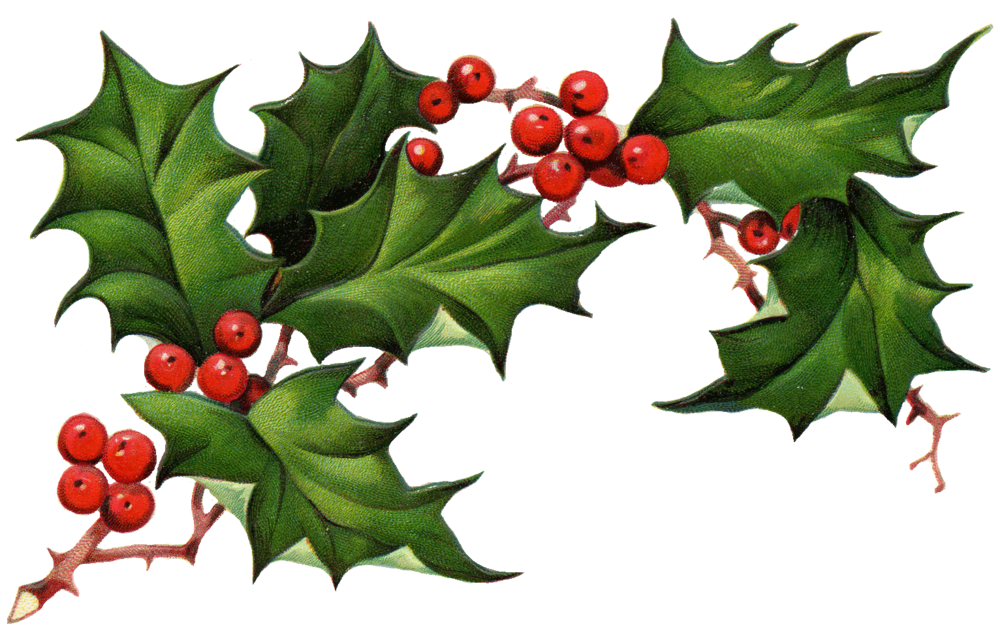 089eba26f77e56ac158e2b08b9604c5e_vintage-holly-clipart-clipart-christmas-holly-and-ivy-clipart_1532-965.png