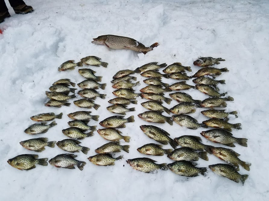 crappies.jpg