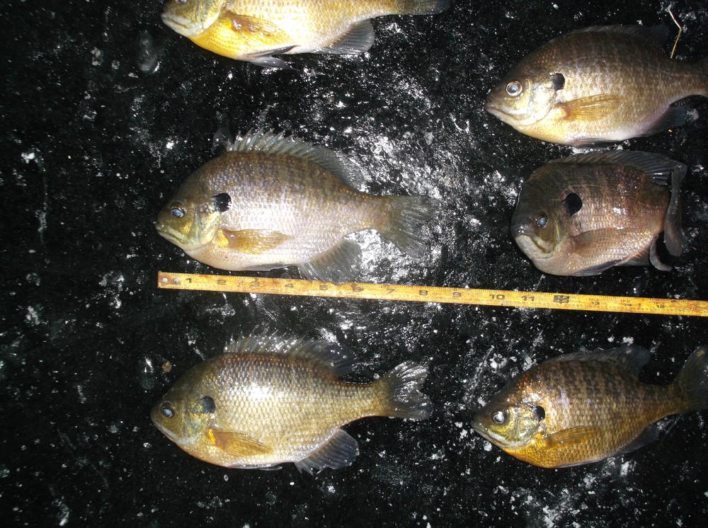 2-5-2017 IC Last Ice Panfish A.JPG