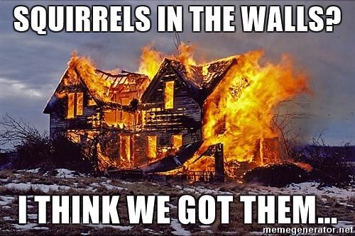 squirrels-in-the-walls-i-think-we-got-them.jpg