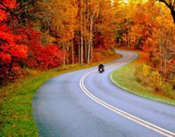 gI_111205_fall road.jpg