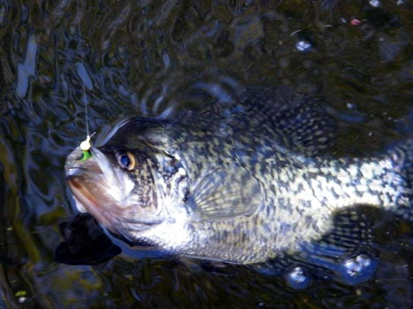 Spring Time Panfish.