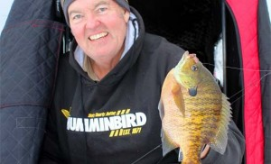 Ice Fishing Walleyes – Explosive Patterns for January Walleyes