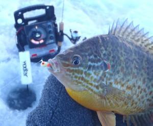 ice fishing no weeds