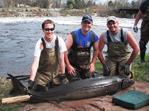sturgeon fishing and spawning