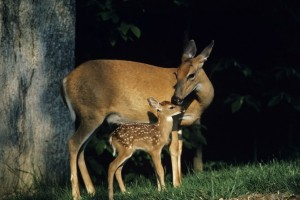 Michigan deer hunting restrictions change for U.P.