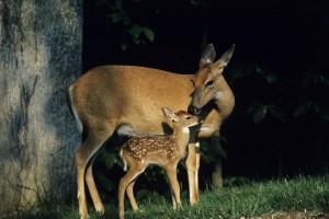 Michigan deer hunting restrictions change for U.P.