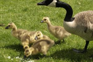 Michigan  confirms highly pathogenic avian influenza