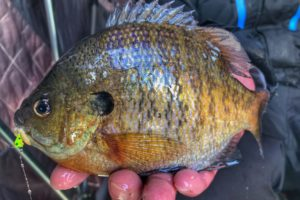 Panfish in the Abyss – Late Season Ice Fishing